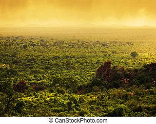 Bush in Kenya, Africa. Tsavo West National Park - Bush...