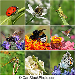 insects - collage with macro photos of insects