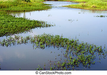 Wetlands - Marsh wetlands in southern China