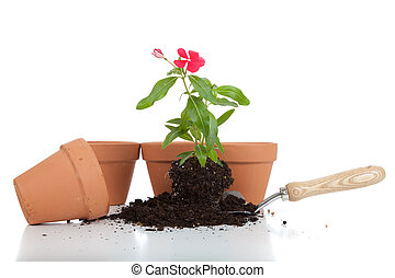 Gardening supplies including pots, trowel and a flower