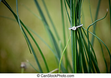 Diamond Engagement Ring in the Grass - A diamond engagement...