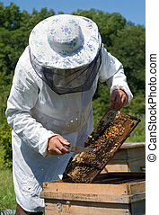 Beekeeper 33 - A beekeeper in veil at apiary among hives...