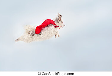 funny curly super dog flying - funny curly super hero dog...