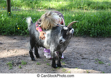 Girl with billy goat - A toddler hugging a billy goat at the...
