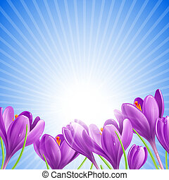 Flowers in spring - Beautiful spring flowers on sunny sky...