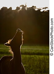 Foal - A new born foal howls to the sun
