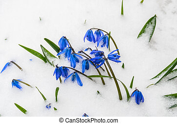 The first flowers in the snow Stock Photo