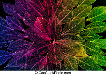 colorful leaf texture and background