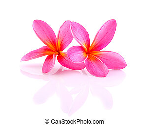 frangipani flower isolated with white background
