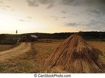 Sunset rural landscape.