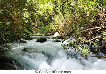 Banias Waterfall . Hermon Stream Nature Reserve, Israel