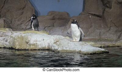 arctic penguin video 1080P