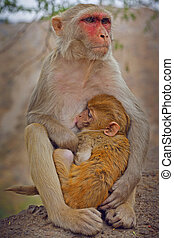 small monkey and his mother  taken in Jaipur, India
