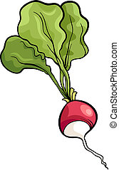 radish vegetable cartoon illustration - Cartoon Illustration...