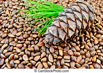 Cedar cone on the texture of cedar nuts