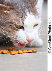 Eating cat food