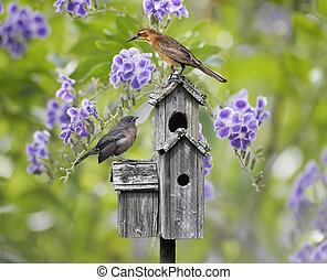 Birds On A Bird House - Femaile Black Bird And A Baby Bird...
