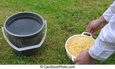 boiled peas bucket water