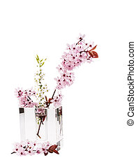 Spring Cherry Blossoms in Transparent Vase - Vertical photo...