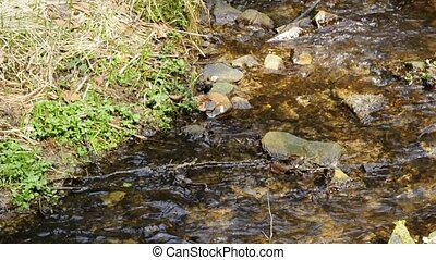 Creek with clear water