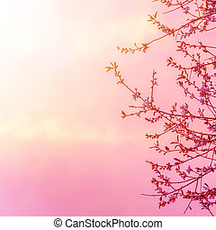Apple tree blossom on pink sunset - Beautiful apple tree...