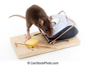 Clever Mouse - a mouse used his computer sibling to get to...