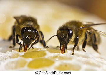 Work of bees in hive - Bees convert nectar into honey and...