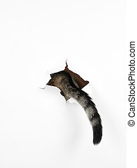 cat's tail through a hole in a white paper - a cat's tail...