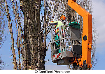 Trimming trees - A worker with a chainsaw trim the tree...