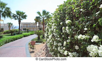 Egyptian hotel with trees and flowers