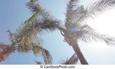 sky adn palm branches - View of the sky through the palm...