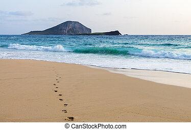 Footprints To The Ocean - Single set of footprints leading...