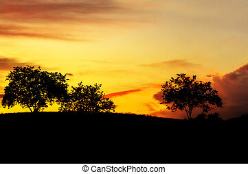 Sunset trees - A view of a silhouetted trees in a field at...