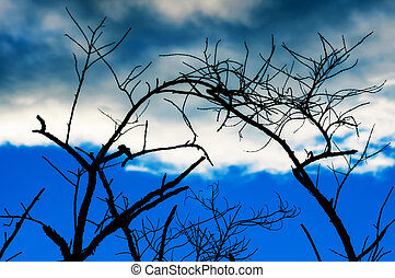 Tree branches at tropical sky.