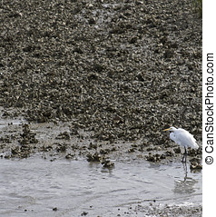 Heron In Its Habitat - A white heron standing in salt water...