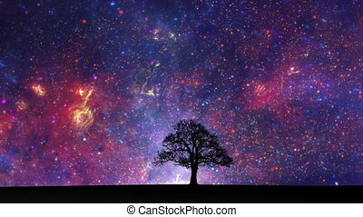 Space tree time lapse