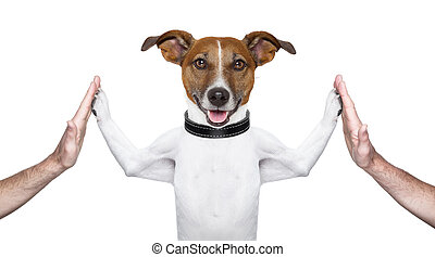 dog high five - dog giving high five on both sides with male...