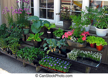 Country Store - A variety of plants for sale at the country...