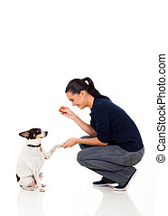 woman giving her pet dog food - beautiful woman giving her...