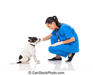 veterinarian doctor playing with pet dog - veterinarian...