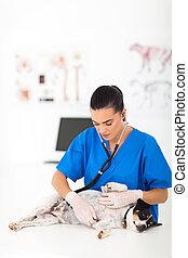 hembra, Veterinario, Examinar, Mascota, perro