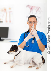 veterinarian preparing dog vaccination - beautiful...