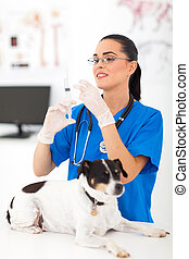 veterinary assistant preparing to inject pet dog