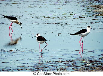 Waders in the swamp - Three insects feeding on the little...