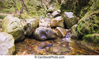 River in the forrest - River flowing on the rocks in the...