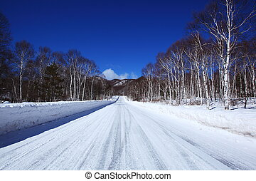 Snow covered road of white birch, Nagano, Japan