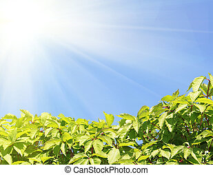 clear blue sky with green plant
