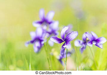 flower of violet
