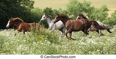 Batch of horses running in flowered scene in spring