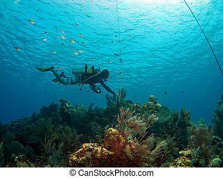 Dive Master checking the Mooring in Cayman Brac - Dive...
